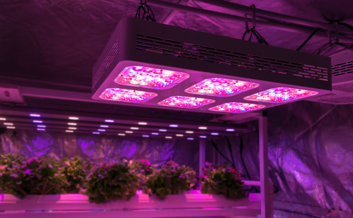 glowing purple indoor overhead LED lights